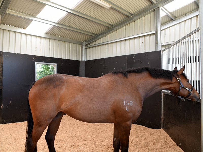 5.4m x 7.2m Rubber floor with shaving, window overlooking paddocks, removable front grill. Horses settle easily in this roomy stable